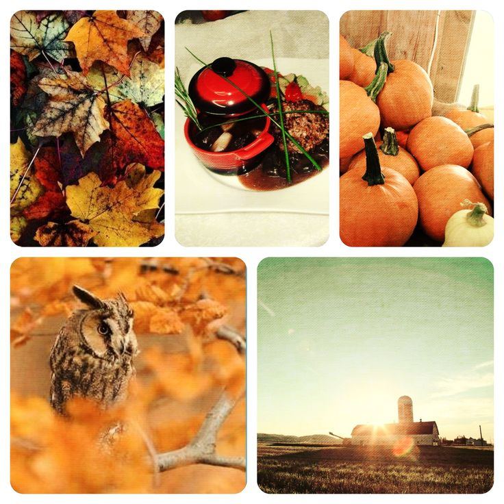 #fall in #Saguenay_Lac can be summarized like that. #pimpkin #autumn