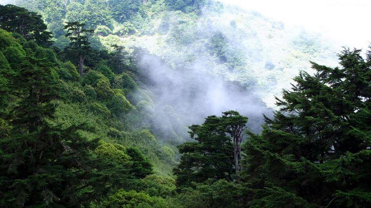 Las, Drzewa, Mgła