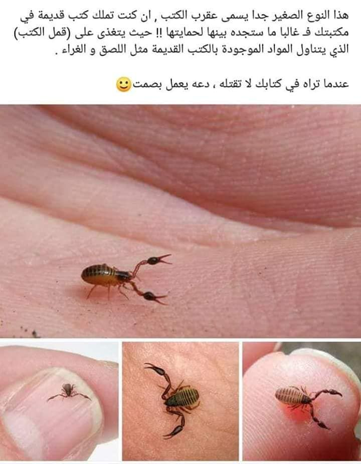 Pin By Nour Ahmad On اقتباسات Food Fruit Iso
