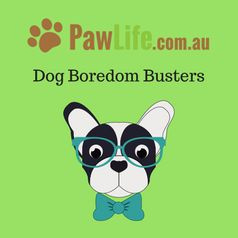 Dog boredom busters