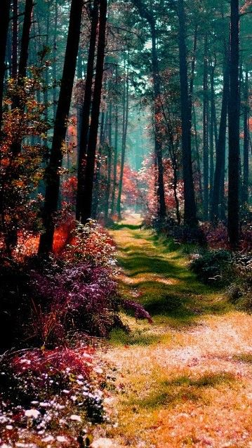 Magical forest in Poland