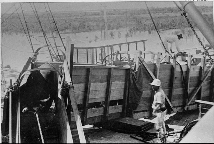 026326PD: Cattle being loaded for shipment at Derby, 1897 https://encore.slwa.wa.gov.au/iii/encore/record/C__Rb2861586