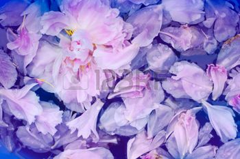 soft floral seamless patterns: Pink peonies petals in water close up, floral background