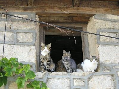 Gatitos en ventana de Patones de Abajo