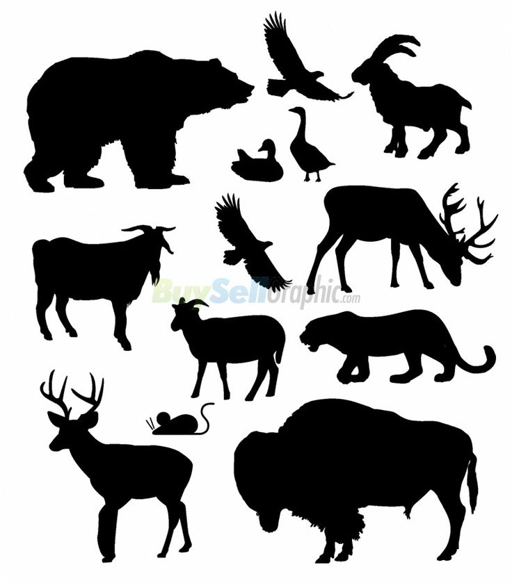 21442_north_american_animalsjpg.jpg (800×912)