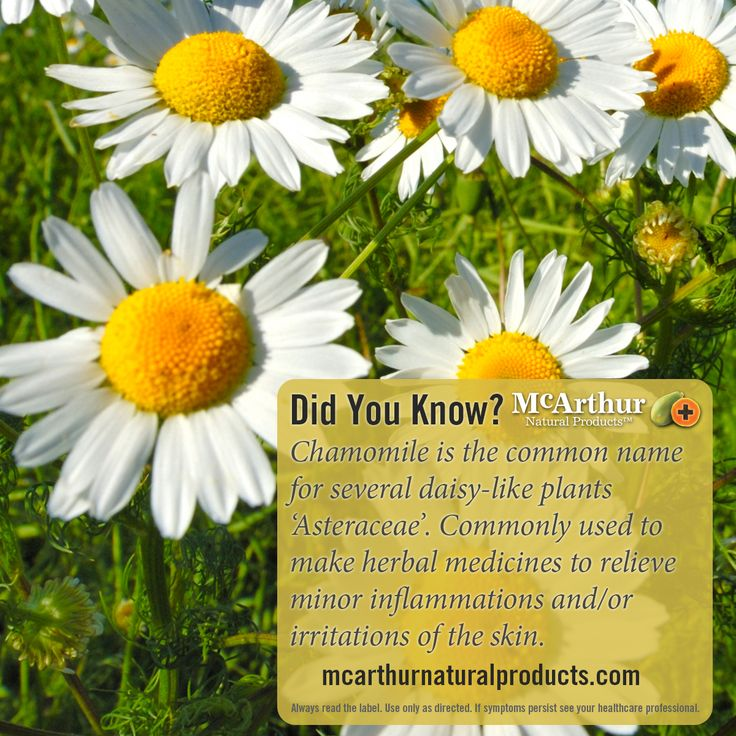 Did You Know?  Chamomile is the common name for several daisy-like plants of the family Asteraceae that are commonly used to make herbal medicines to relieve minor inflammations and/or irritations of the skin.  Find out more about our Eczema Cream which contains chamomile. http://mcarthurnaturalproducts.com/products/eczema-cream-75g/  Always read the label. Use only as directed. If symptoms persist see your healthcare professional.  #mnp #mcarthurnaturalproducts #caricapapaya #pawpaw #papaya