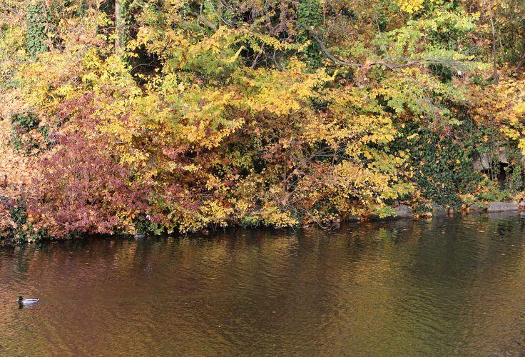 Herbst / Fall   Wiesbaden Kurpark