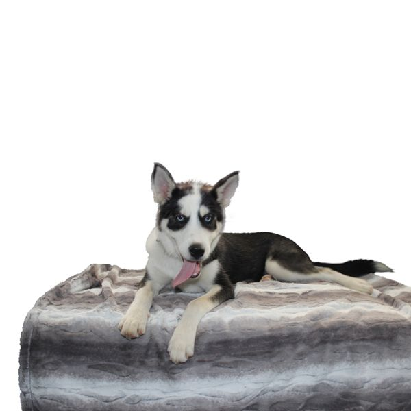 Luxury and comfort go hand-in-hand with the Luxe Pup Luxury Throw Blanket