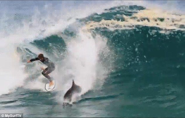 The 19-year-old managed to dodge the cheeky local and stay on his board to finish riding t...