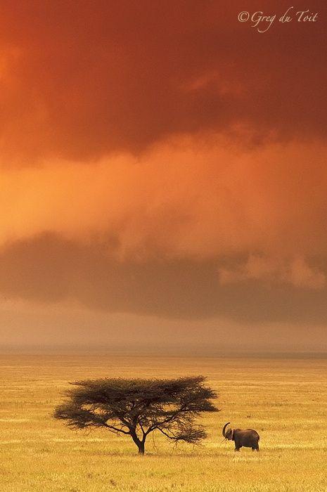 Serengeti at dusk, Tanzania, Africa
