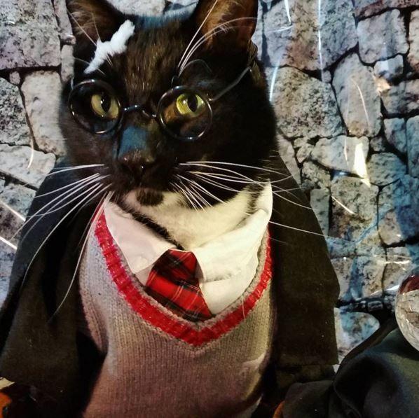 the cosplay Happy cat