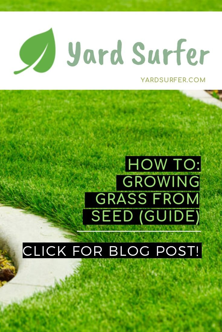 How To Grow Grass From Seed The Best Way Growing Grass Growing Grass From Seed Grass