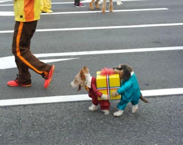 Costume da carnevale, effetto doppio personaggio: STUPENDO!