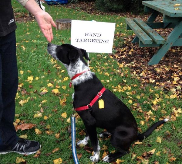 Each young person is matched with a previously unwanted dog. Under our dog trainer, they are responsible for training their dogs over the eight week course. Dog training teaches the value of patience, discipline and hard work. It also offers young people the opportunity to learn co-operative and considerate ways of dealing with problems which may arise during the training...