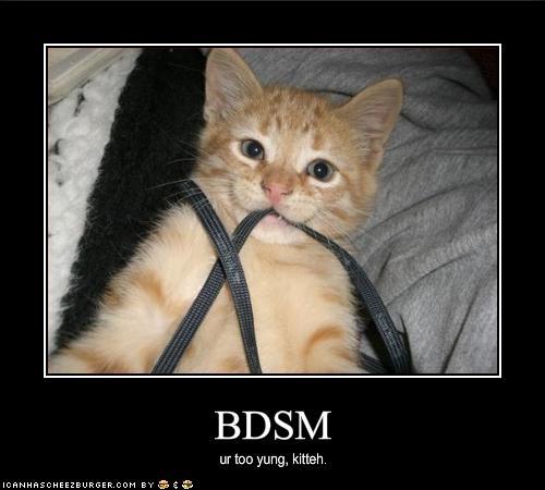 Cat Bondage. Hahah | Silly, random funness right here ...