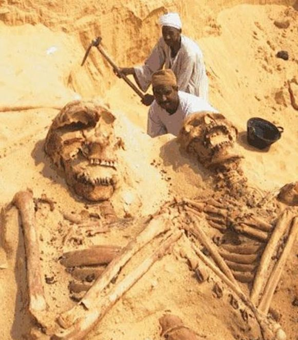 12 best images about giant skeletons found! on pinterest | giant, Skeleton