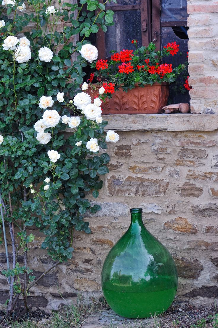 Roses and Geranium in front of a window