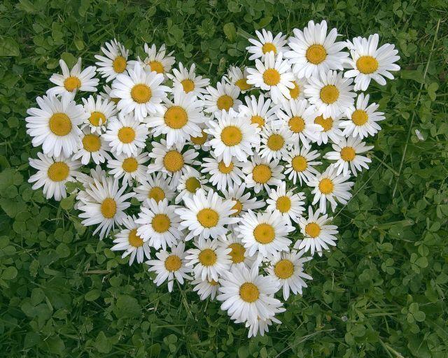 Цветочный флирт - Флора и фауна - Живой уголок - Каталог статей - ЛИНИИ ЖИЗНИ