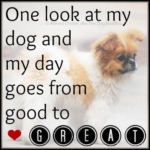 One Look At My Dog And My Day Goes From Good To Great Dog Quotes Adorable I Love My Dog Quotes