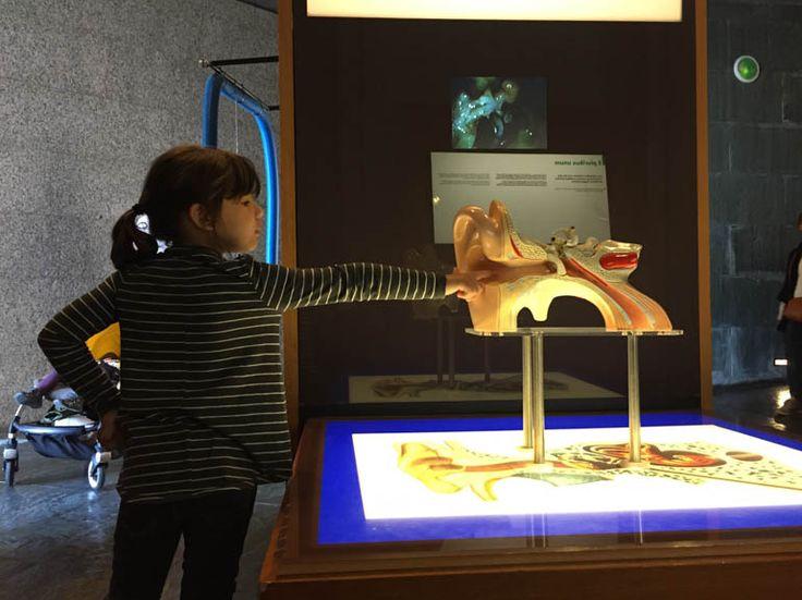 Museo del cuerpo humano. La Coruña.