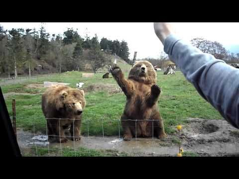 Adorable waving bears. I want to go to a game farm!
