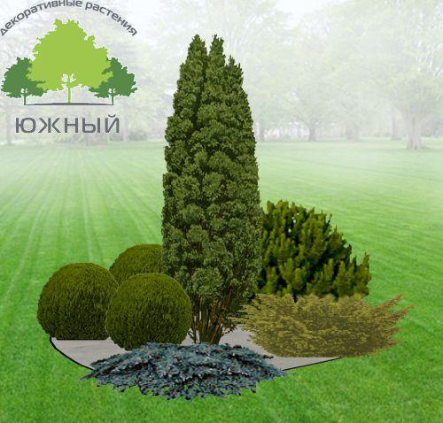 Готовые ландшафтные композиции – Москва, ООО Питомник декоративных культур «Южный».