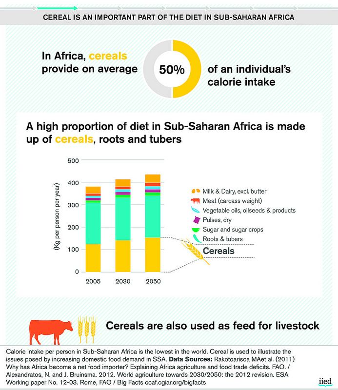 Cereal is an important part of the diet in Sub-Saharan Africa | by iied.org