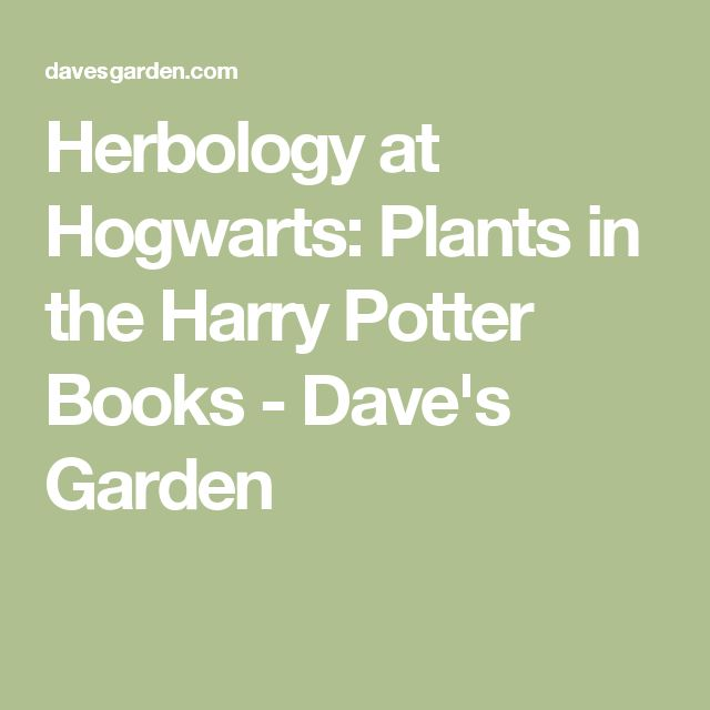 Herbology at Hogwarts: Plants in the Harry Potter Books - Dave's Garden