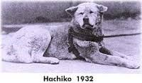 picture of hachiko shibuya - Google Search