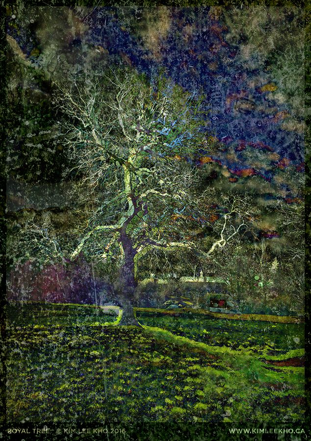 Royal Tree, photo-based mixed media, 2016. A gnarly old tree shot in Windsor Great Park in England this winter. Zoom in to see the texture and colour and other surprising details properly. Or visit this link: https://www.flickr.com/photos/kimleekho/24848099003/in/photostream/lightbox/