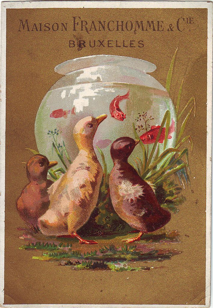 Chromo Maison Franchomme Bruxelles Ducklings Watching Goldfish In Bowl Romanet 4 In 2020 Goldfish Antique Postcard Art Through The Ages