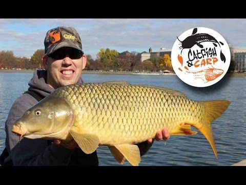 How to catch carp - carp fishing tips and techniques - carp bait - (More info on: http://1-W-W.COM/fishing/how-to-catch-carp-carp-fishing-tips-and-techniques-carp-bait/)