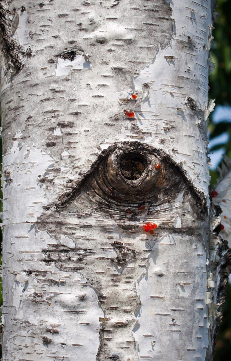 The eye of the tree