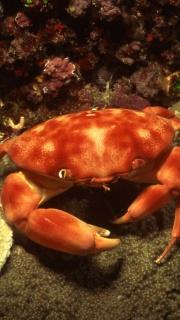 Feeling a little crabbie  ;)