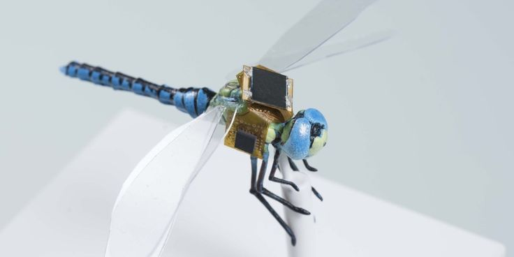 Remote-Controlled Cyborg Dragonflies Will Be Flown Like Drones.  Sensors embedded in insects' brains would allow a pilot to direct them to pollinate crops — or track enemy forces.