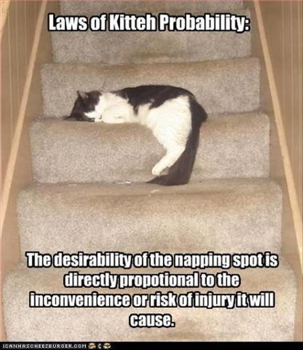 I'm sure every cat is born with this ability