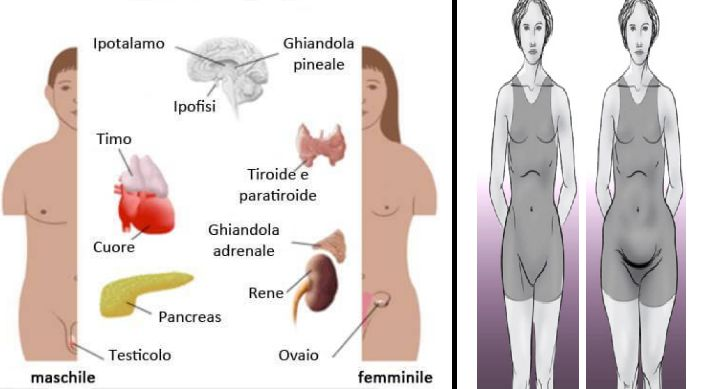 Attenzione agli scompensi ormonali ed ai segnali che ci manda il corpo. E' importante saperli ascoltare per scongiurare anche l'insorgenza di gravi malattie