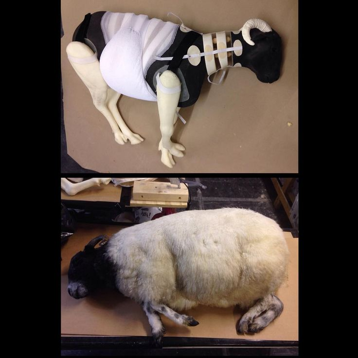 "Dead sheep puppet made by Stitches and Glue for Tim Burton's film ""Miss Peregrine's Home for Peculiar Children""."