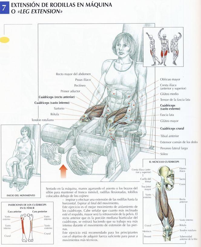 Pin De Jonathan Araya En Gym Piernas Ejercicios Para Piernas Ejercicios Ejercicios Musculares