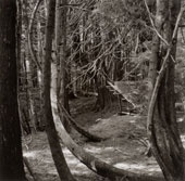 Liz Magor  Deep Woods Portfolio, 1999  silver gelatin print  Collection of the Vancouver Art Gallery  Gift of the	 Artist