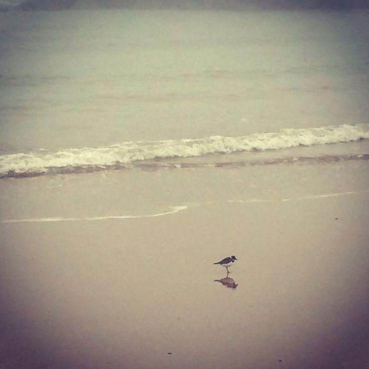 Tweet on the beach
