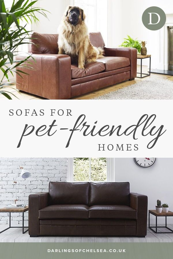 Fabric And Leather Sofas For Pet Lovers Darlings Of Chelsea Pet Friendly Living Room Living Room Sofa Dog Living Room