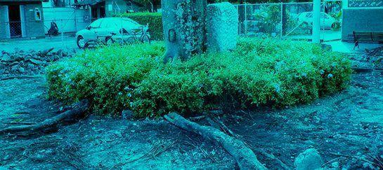 Afección de cimentaciones por árboles cercanos  Este monográfico trata sobre la influencia y afección de cimentaciones y otros elementos constructivos por raíces de árboles cercanos. En esta primera entrada veremos cómo y por qué pueden originarse alguna patología consecuencia de la invasión de raíces en el terreno. Posteriormente publicaremos fichas de los árboles más