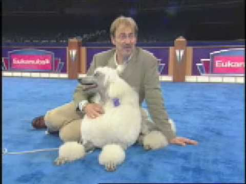 Handling tips from top handlers on how to make your dog shine in the show ring