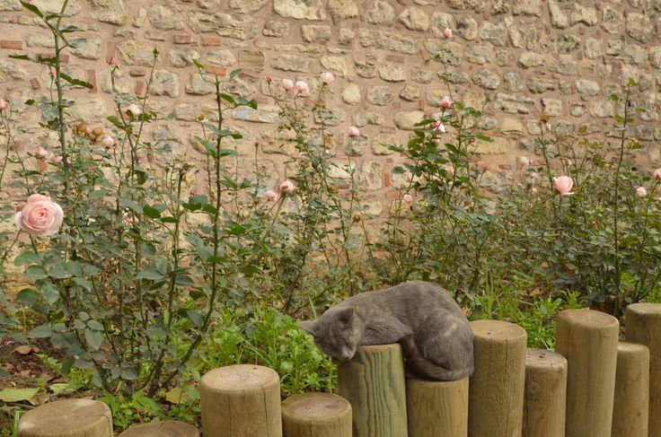 https://fromplacetospace.wordpress.com/2014/11/25/the-city-of-cats/ sleeping cat in Sultanahmet