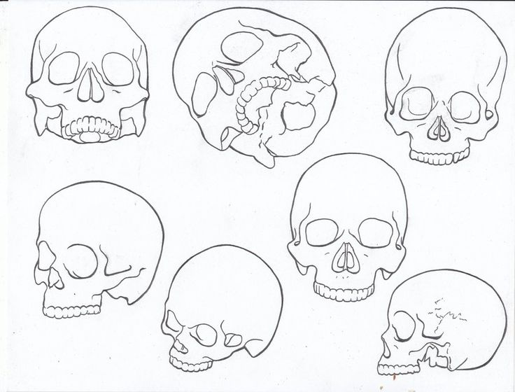 Line Art Skull : Best images about colouring sheets on pinterest
