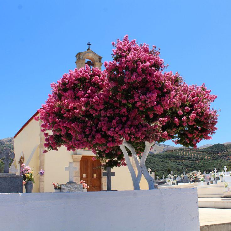 Crete.. Little village Made by CMS