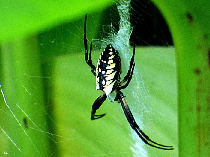 759 best images about photos entered in capture arkansas contest on pinterest cove lakes and for What does a garden spider look like