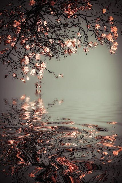 Look at the reflection of flowers and leaves - in the water. Pretty and delicate.