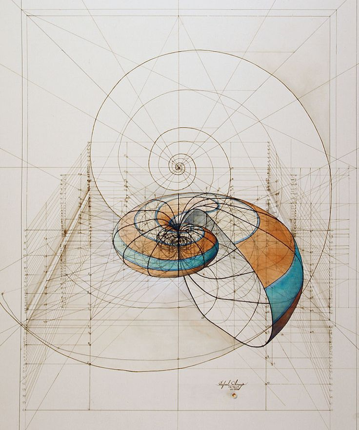 Hand-Drawn Coloring Book Reveals Mathematical Beauty Of Nature's Designs With Golden Ratio Illustrations | Bored Panda